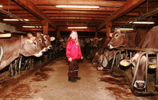 Floachhof, Urlaub am Bauernhof, Weerberg, Stall, Kühe