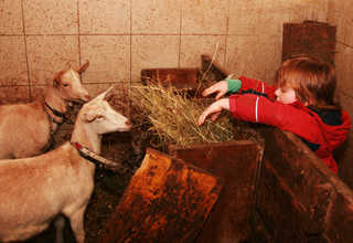 Floachhof Urlaub am Bauernhof Weerberg Ziegen