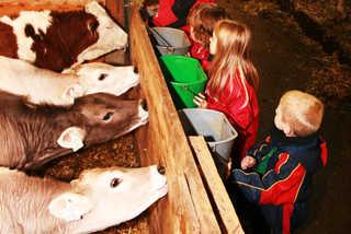 Floachhof Urlaub am Bauernhof Weerberg Stall Kälber tränken