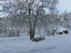 Der Kastanienbaum im Schnee