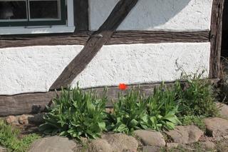 Reetdachhaus 4 Linden Reddelich F 678