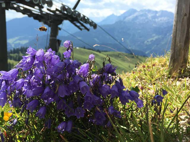Ferienwohnung Ferienwohnungen Kogelblick Gosau - Ferienwohnung A mit Balkon (2345094), Gosau, Salzkammergut, Oberösterreich, Österreich, Bild 29