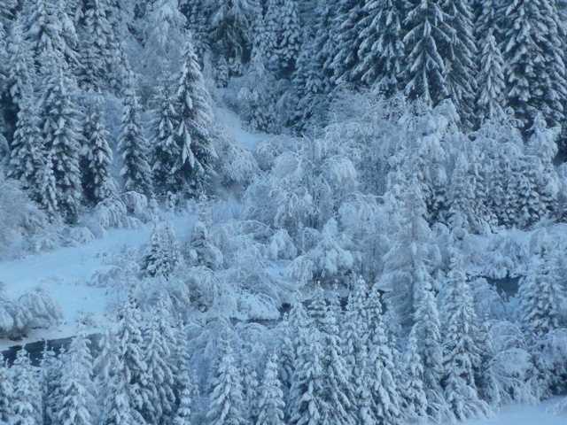 Appartement de vacances Schett - Appartement 1 (2468275), St. Veit in Defereggen, Osttirol, Tyrol, Autriche, image 13